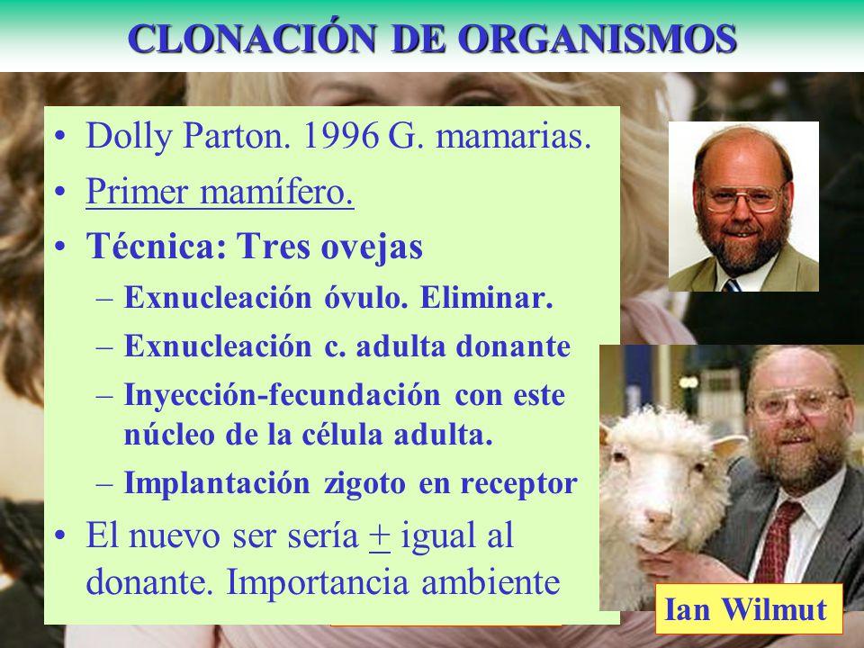 Dolly Parton CLONACIÓN DE ORGANISMOS Dolly Parton. 1996 G. mamarias. Primer mamífero. Técnica: Tres ovejas –Exnucleación óvulo. Eliminar. –Exnucleació