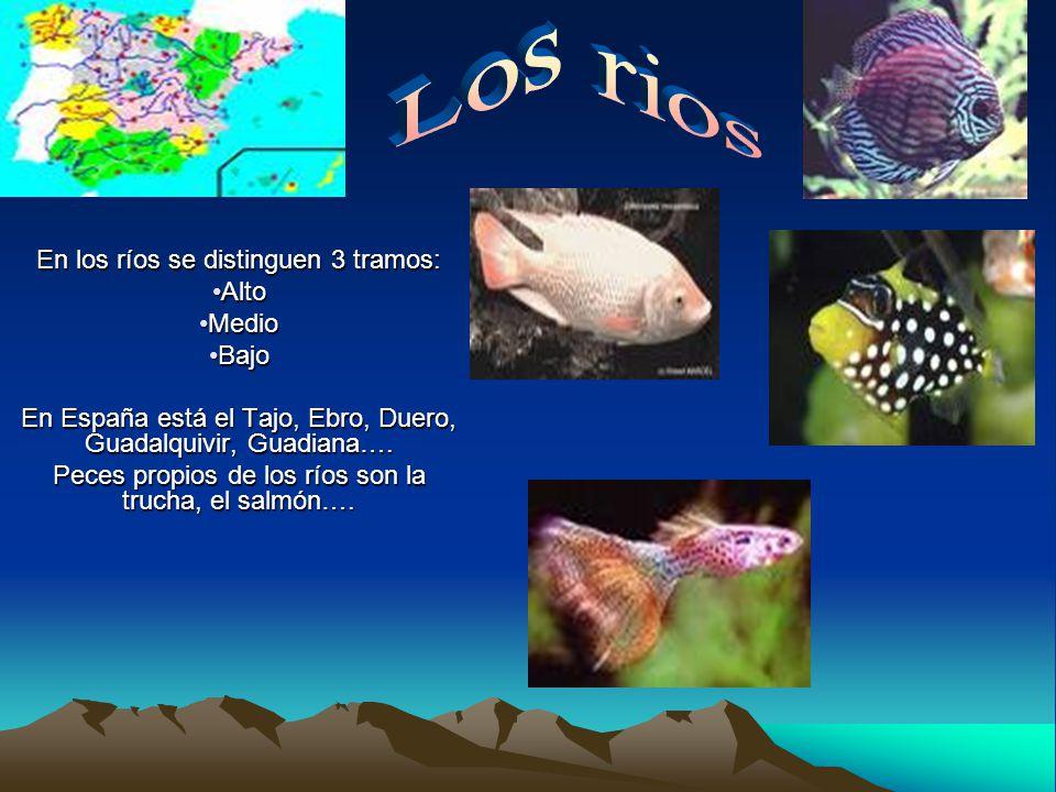 En los ríos se distinguen 3 tramos: AltoAlto MedioMedio BajoBajo En España está el Tajo, Ebro, Duero, Guadalquivir, Guadiana….