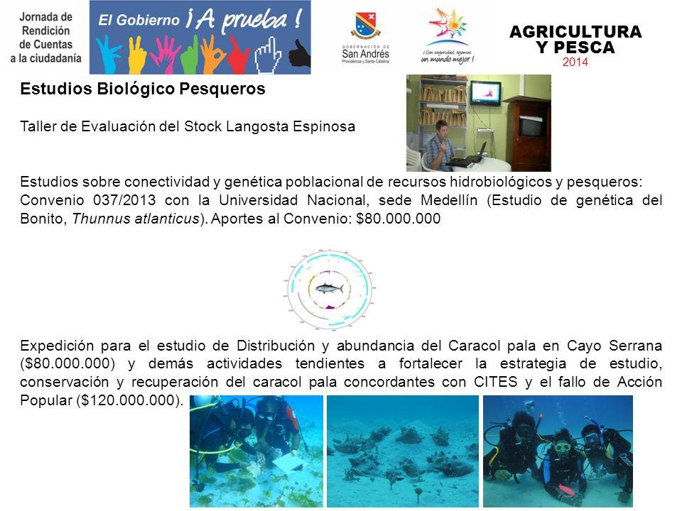 AGRICULTURA Y PESCA 2014 Estudios Biológico Pesqueros Taller de Evaluación del Stock Langosta Espinosa Estudios sobre conectividad y genética poblacio