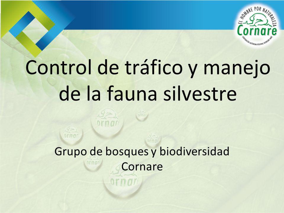 Control de tráfico y manejo de la fauna silvestre Grupo de bosques y biodiversidad Cornare