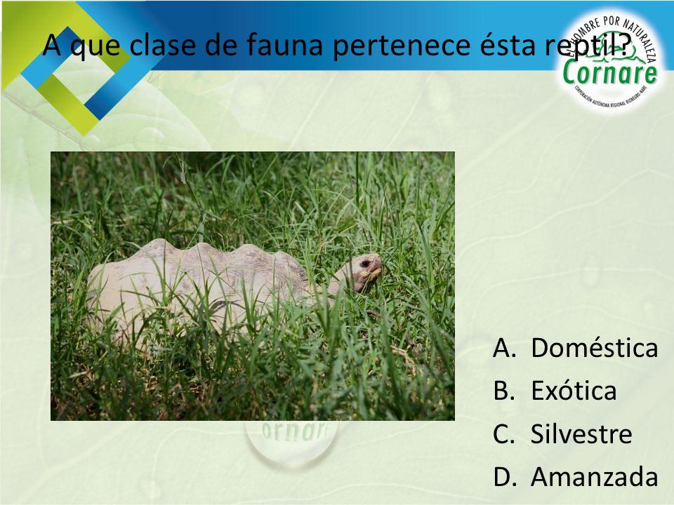A que clase de fauna pertenece ésta reptil? A.Doméstica B.Exótica C.Silvestre D.Amanzada