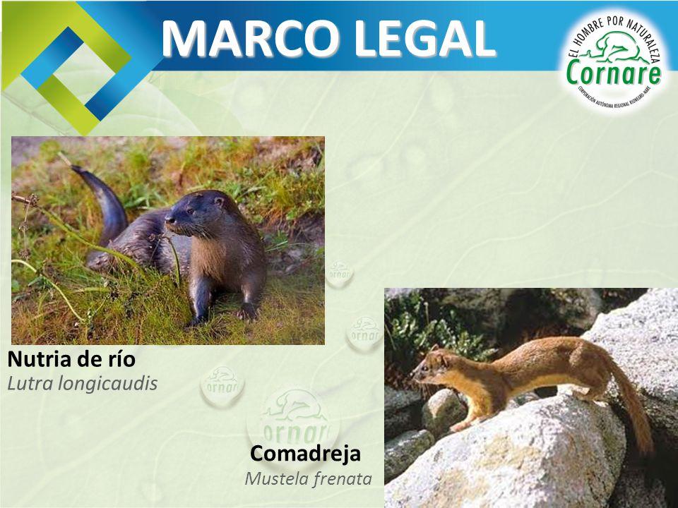 MARCO LEGAL Lutra longicaudis Nutria de río Mustela frenata Comadreja