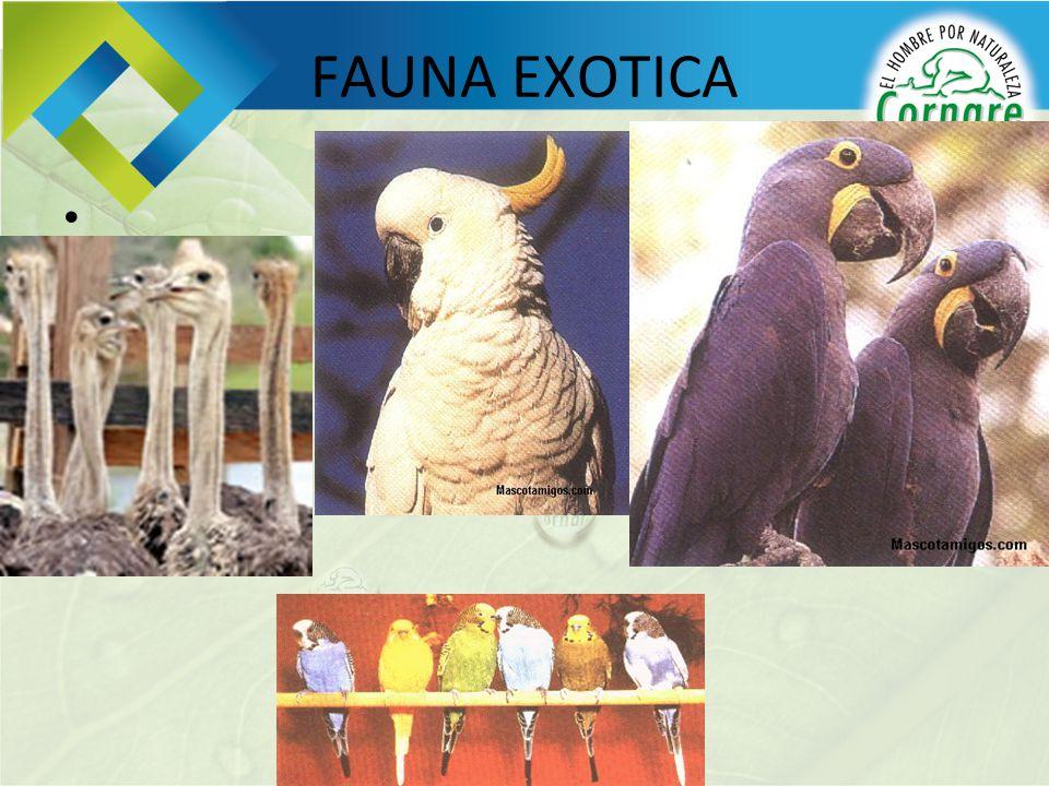 FAUNA EXOTICA