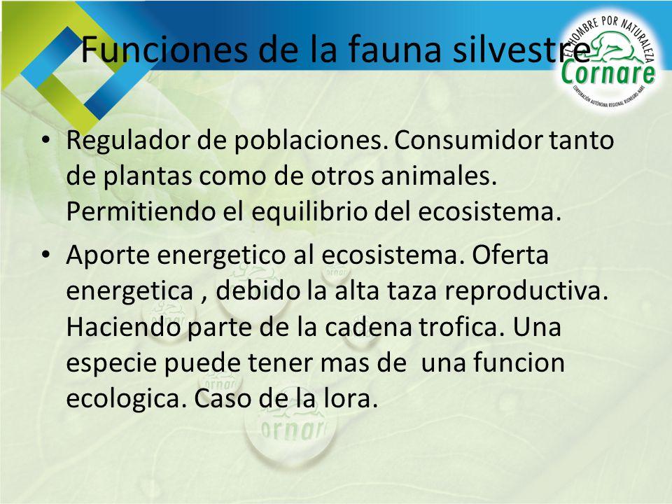 Funciones de la fauna silvestre Regulador de poblaciones. Consumidor tanto de plantas como de otros animales. Permitiendo el equilibrio del ecosistema