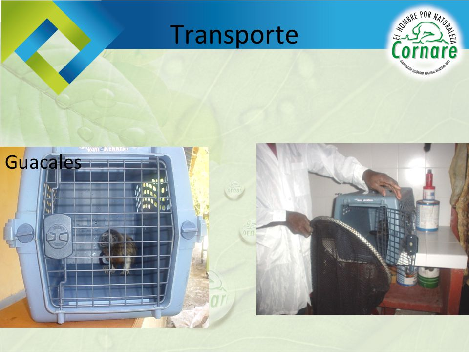 Transporte Guacales