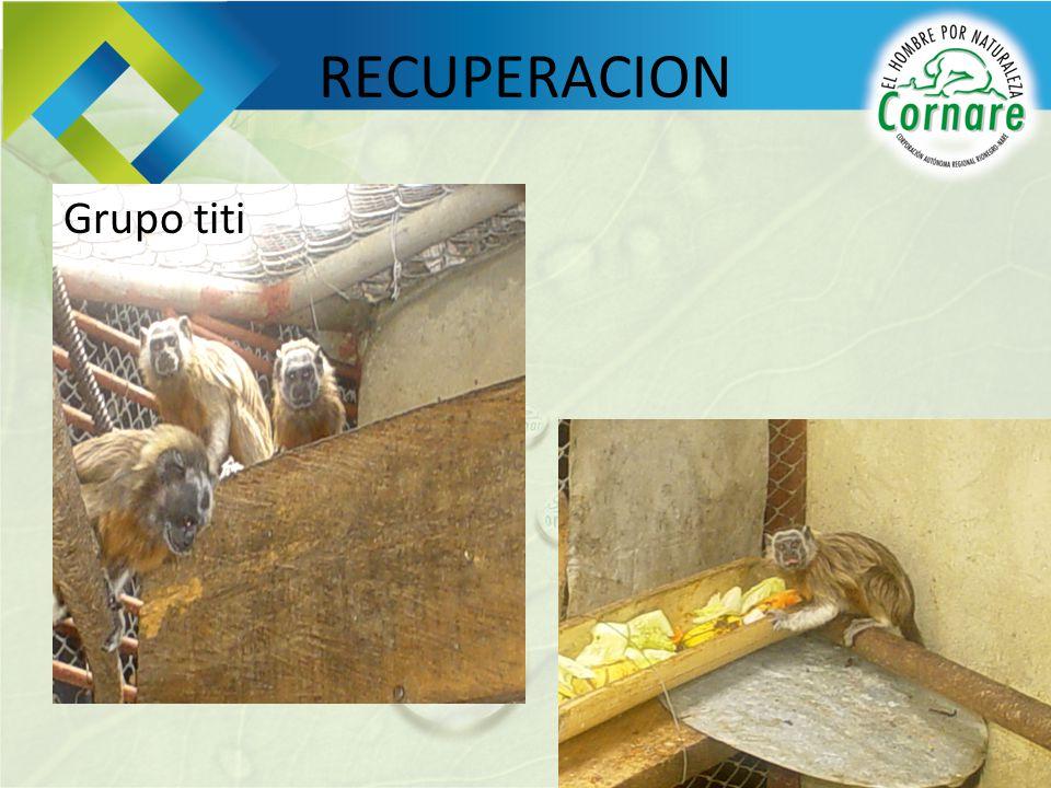 RECUPERACION Grupo titi