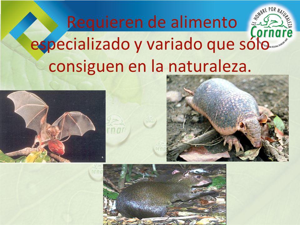 Requieren de alimento especializado y variado que sólo consiguen en la naturaleza.