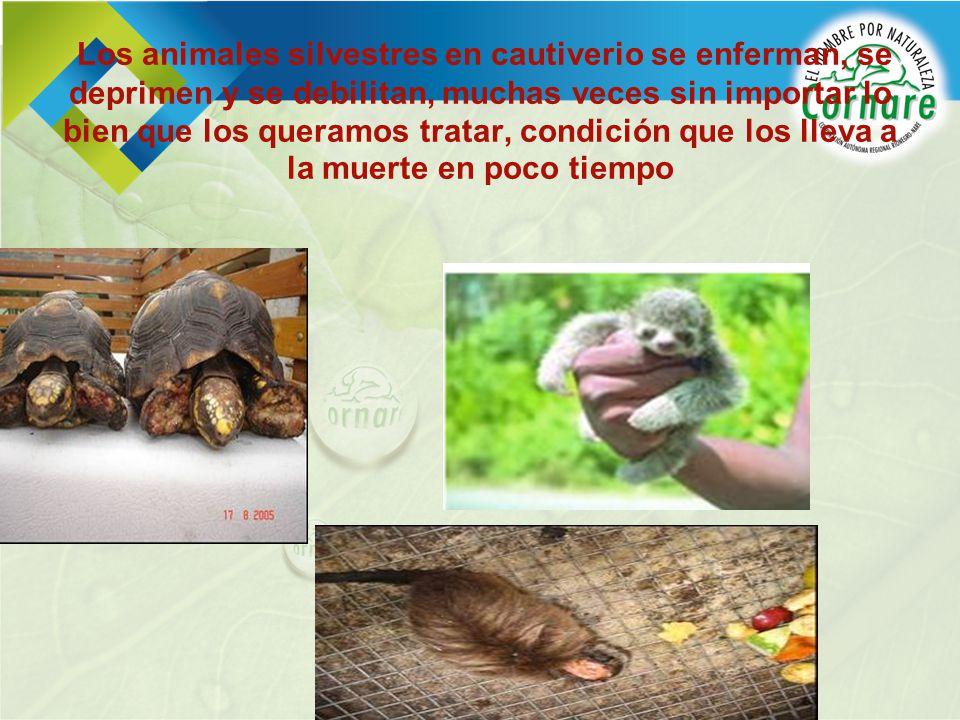 Los animales silvestres en cautiverio se enferman, se deprimen y se debilitan, muchas veces sin importar lo bien que los queramos tratar, condición qu