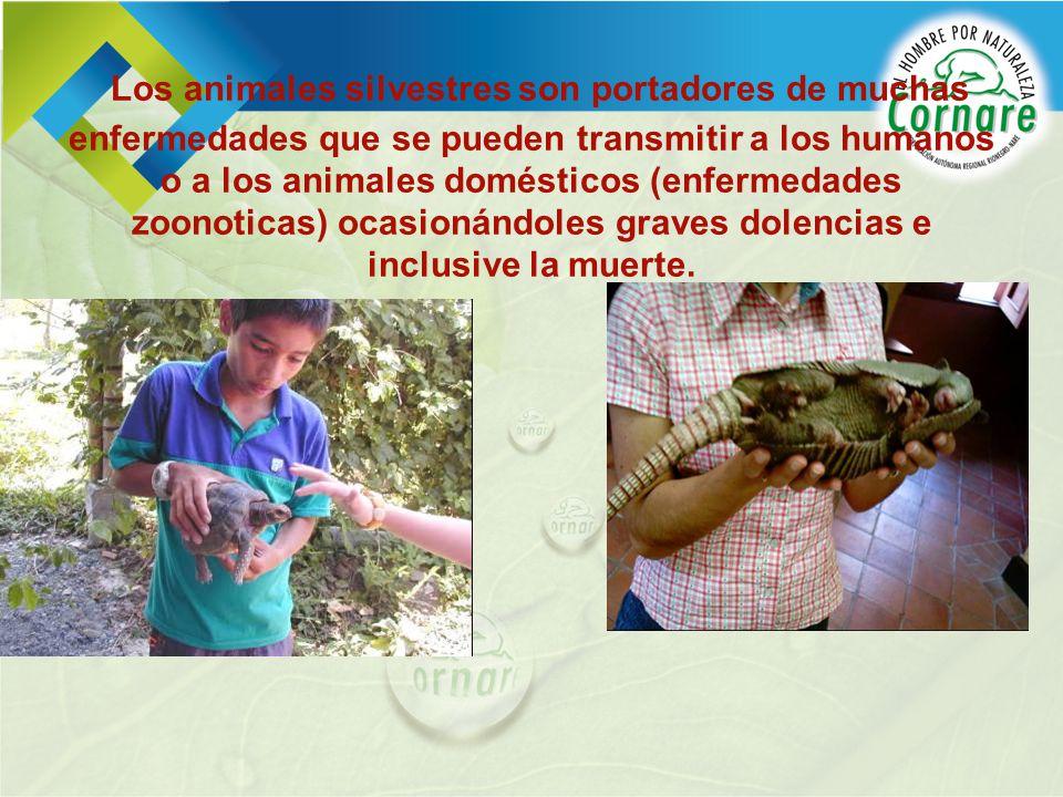 Los animales silvestres son portadores de muchas enfermedades que se pueden transmitir a los humanos o a los animales domésticos (enfermedades zoonoti