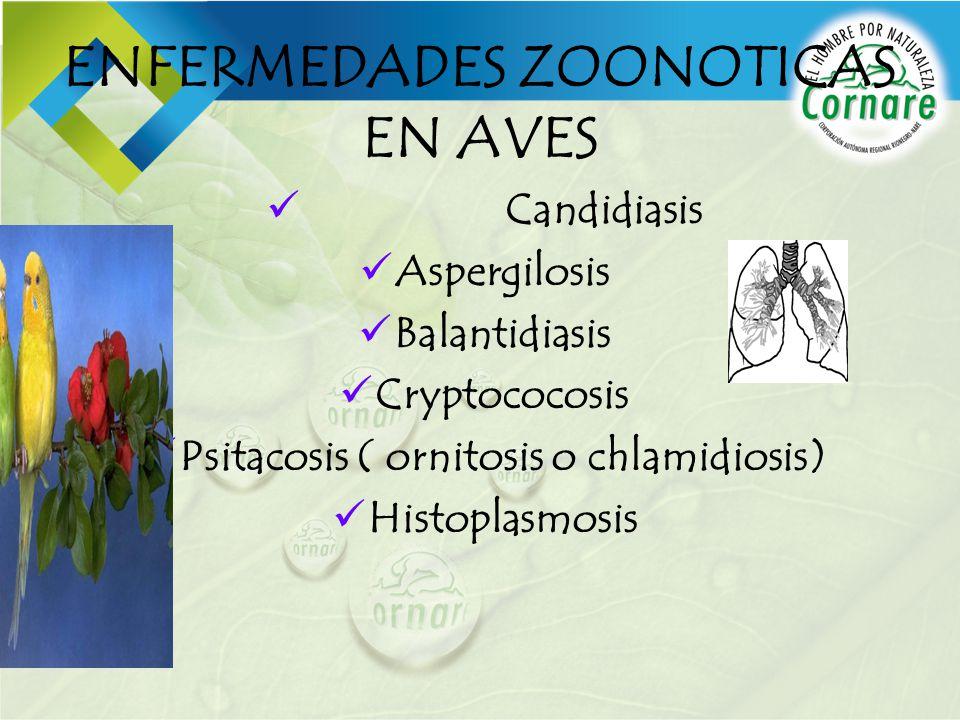 ENFERMEDADES ZOONOTICAS EN AVES Candidiasis Aspergilosis Balantidiasis Cryptococosis Psitacosis ( ornitosis o chlamidiosis) Histoplasmosis