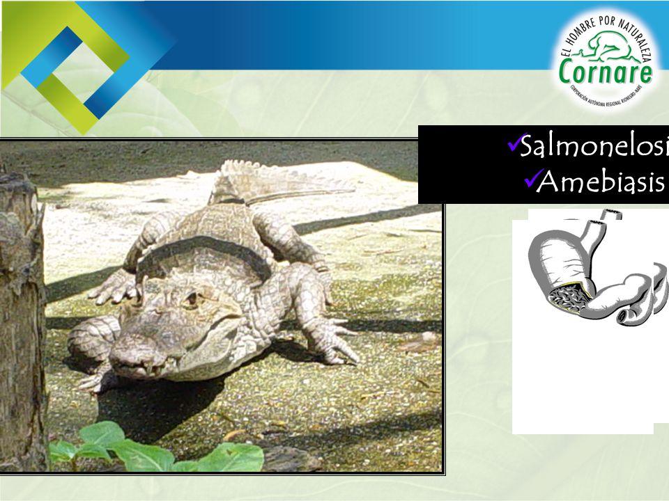 Salmonelosis Amebiasis
