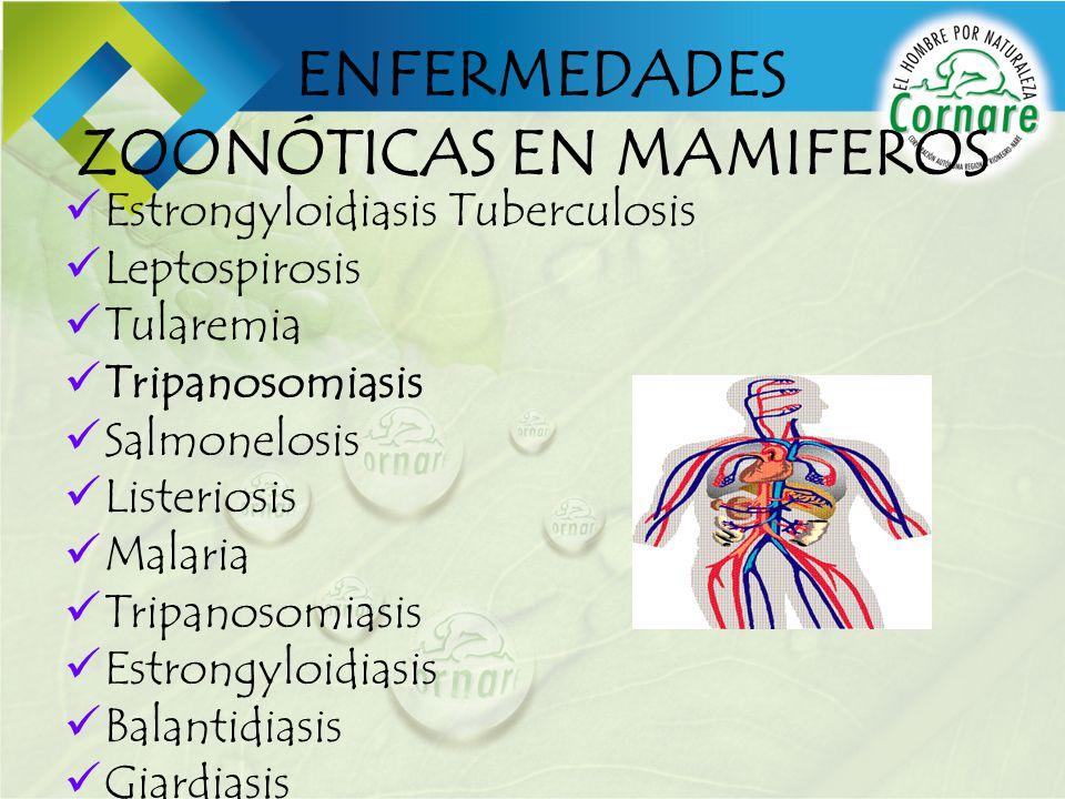ENFERMEDADES ZOONÓTICAS EN MAMIFEROS Estrongyloidiasis Tuberculosis Leptospirosis Tularemia Tripanosomiasis Salmonelosis Listeriosis Malaria Tripanoso