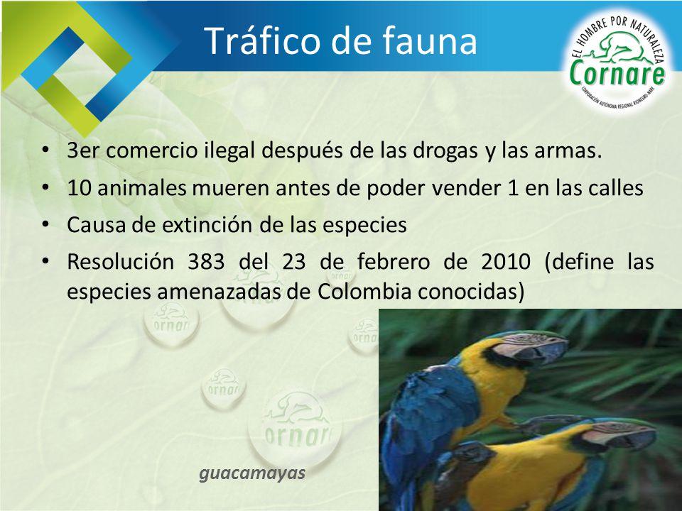 Tráfico de fauna 3er comercio ilegal después de las drogas y las armas. 10 animales mueren antes de poder vender 1 en las calles Causa de extinción de