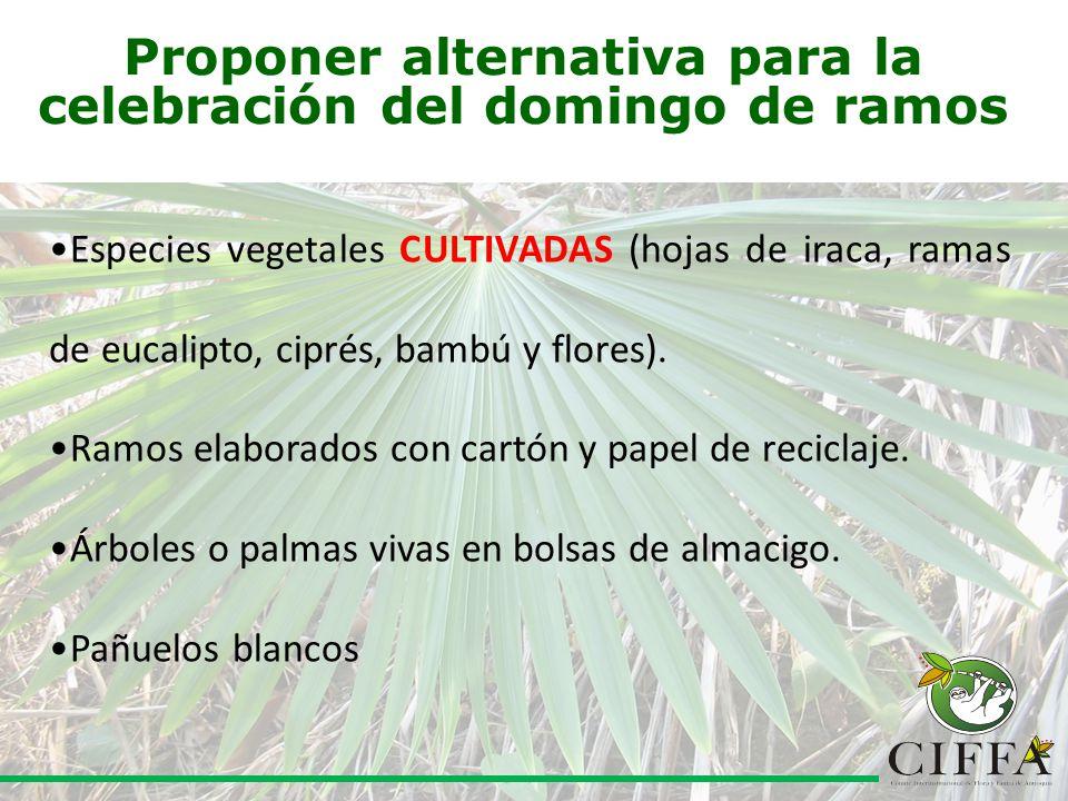 Proponer alternativa para la celebración del domingo de ramos Especies vegetales CULTIVADAS (hojas de iraca, ramas de eucalipto, ciprés, bambú y flores).