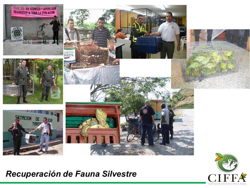 Recuperación de Fauna Silvestre