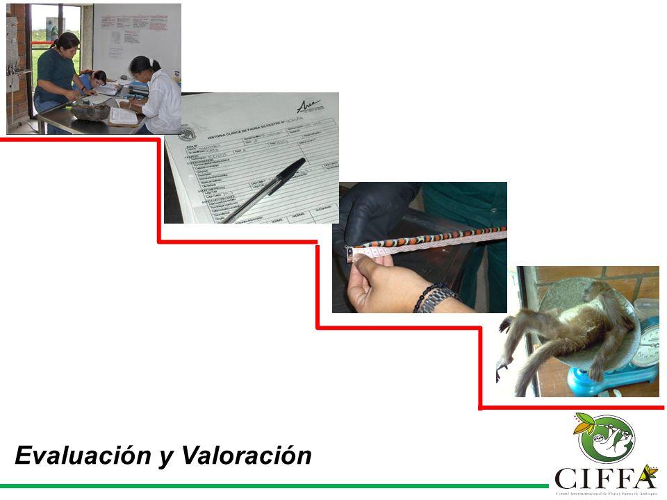 Evaluación y Valoración