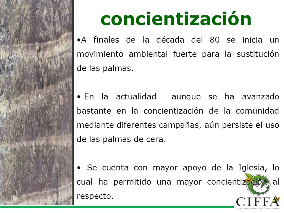 concientización A finales de la década del 80 se inicia un movimiento ambiental fuerte para la sustitución de las palmas.