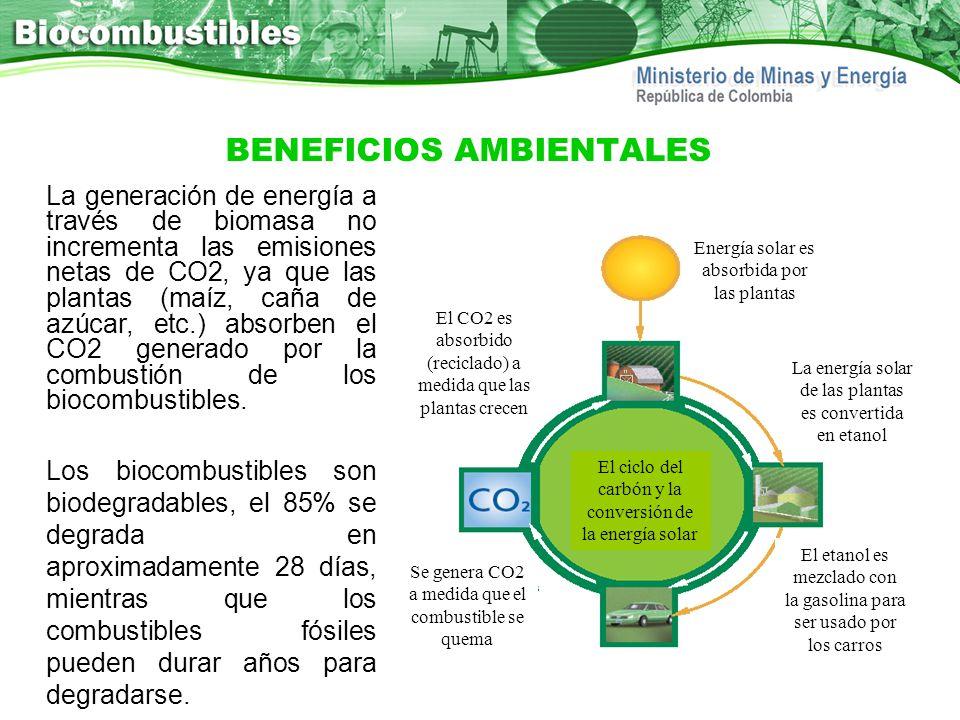 BENEFICIOS AMBIENTALES La generación de energía a través de biomasa no incrementa las emisiones netas de CO2, ya que las plantas (maíz, caña de azúcar