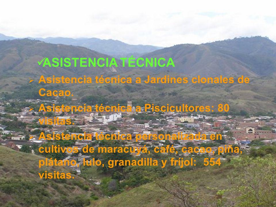 ASISTENCIA TÉCNICA Asistencia técnica a Jardines clonales de Cacao.