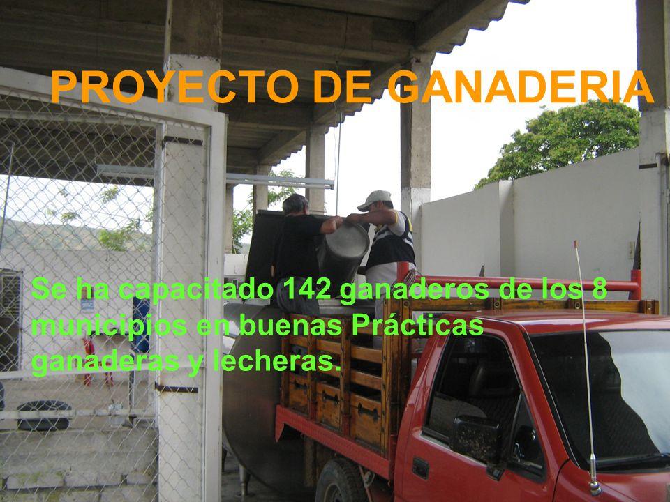 PROYECTO DE GANADERIA Se ha capacitado 142 ganaderos de los 8 municipios en buenas Prácticas ganaderas y lecheras.