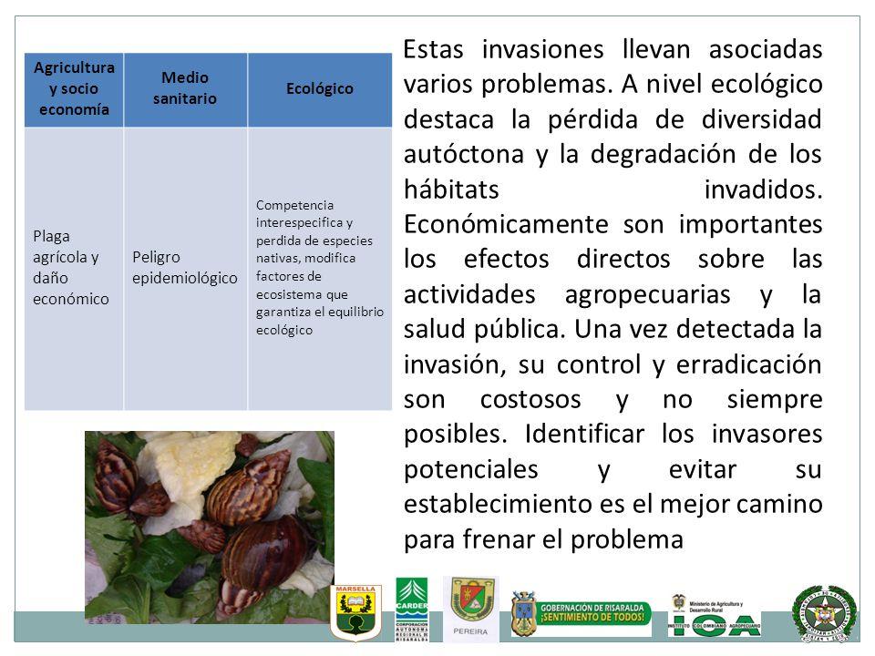 Estas invasiones llevan asociadas varios problemas. A nivel ecológico destaca la pérdida de diversidad autóctona y la degradación de los hábitats inva