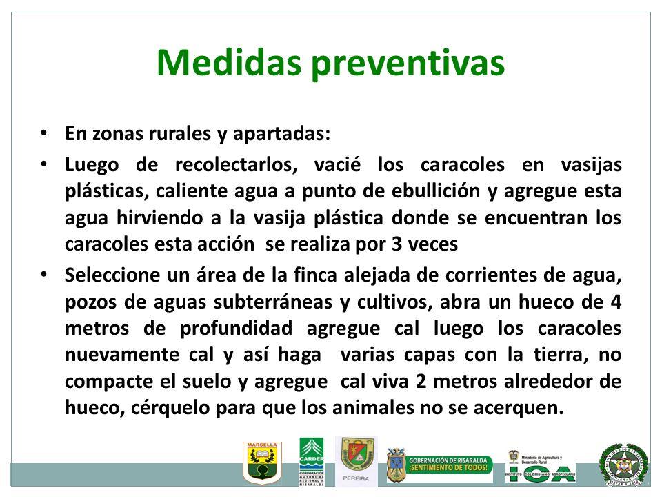 Medidas preventivas En zonas rurales y apartadas: Luego de recolectarlos, vacié los caracoles en vasijas plásticas, caliente agua a punto de ebullició