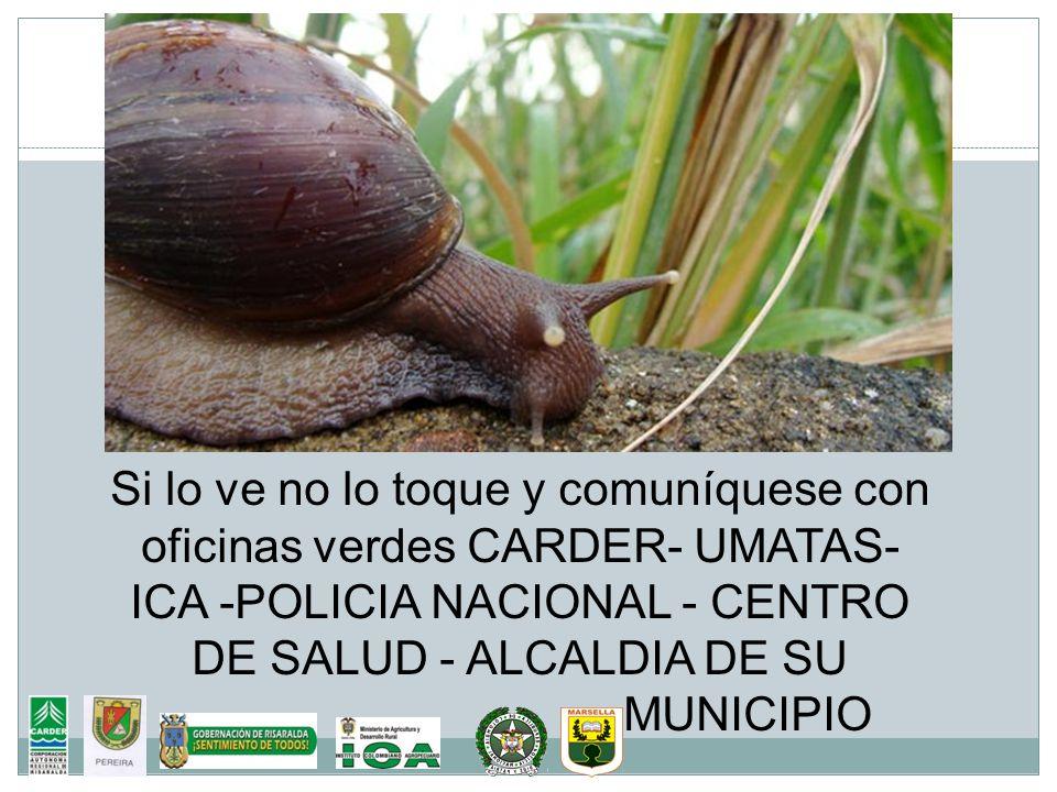Si lo ve no lo toque y comuníquese con oficinas verdes CARDER- UMATAS- ICA -POLICIA NACIONAL - CENTRO DE SALUD - ALCALDIA DE SU MUNICIPIO