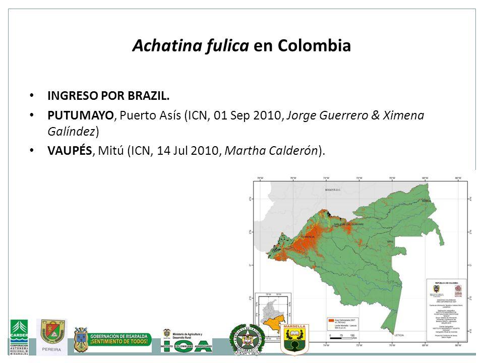 Achatina fulica en Colombia INGRESO POR BRAZIL. PUTUMAYO, Puerto Asís (ICN, 01 Sep 2010, Jorge Guerrero & Ximena Galíndez) VAUPÉS, Mitú (ICN, 14 Jul 2