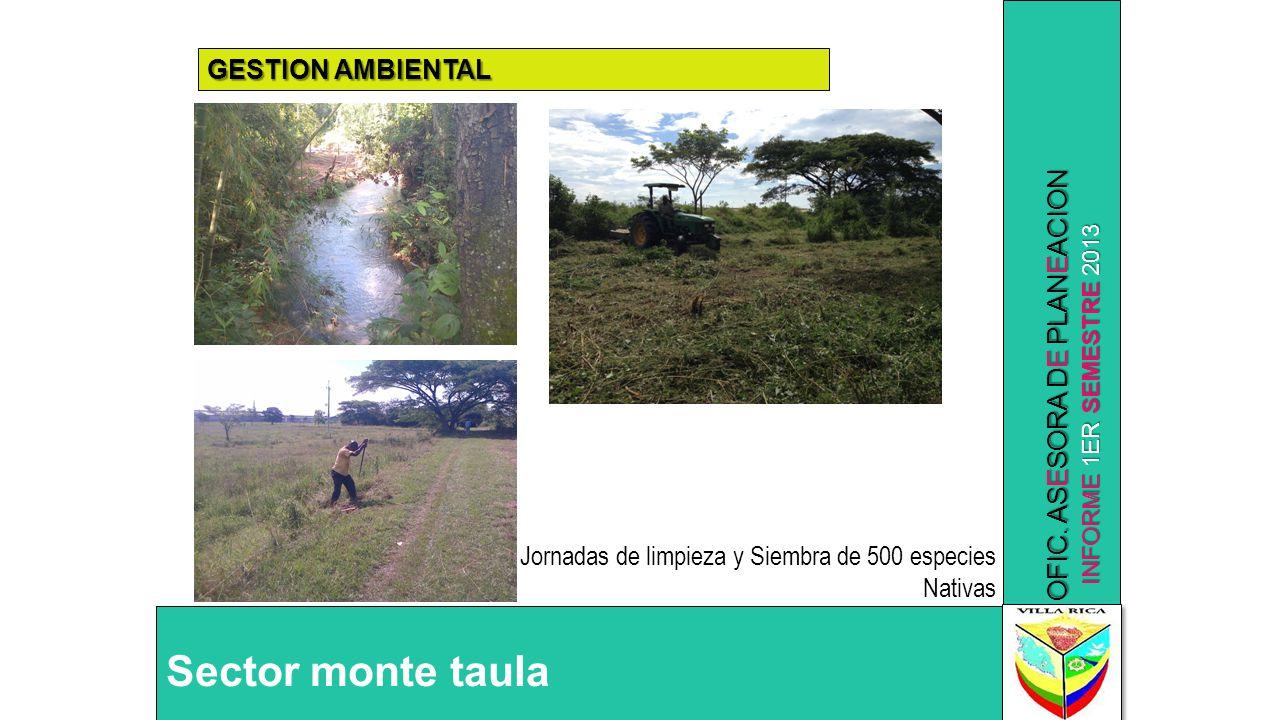 INFORME 1ER SEMESTRE 2013 OFIC. ASESORA DE PLANEACION GESTION AMBIENTAL Sector monte taula Jornadas de limpieza y Siembra de 500 especies Nativas