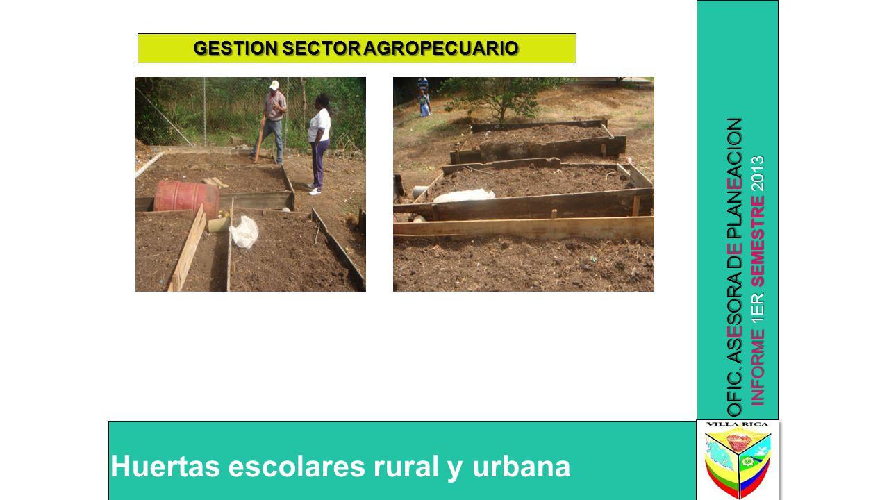 INFORME 1ER SEMESTRE 2013 OFIC. ASESORA DE PLANEACION Huertas escolares rural y urbana GESTION SECTOR AGROPECUARIO
