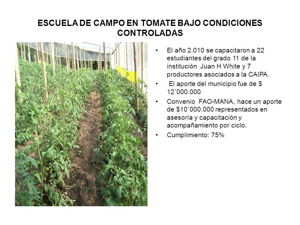 ESCUELA DE CAMPO EN TOMATE BAJO CONDICIONES CONTROLADAS El año 2.010 se capacitaron a 22 estudiantes del grado 11 de la institución Juan H White y 7 productores asociados a la CAIPA.