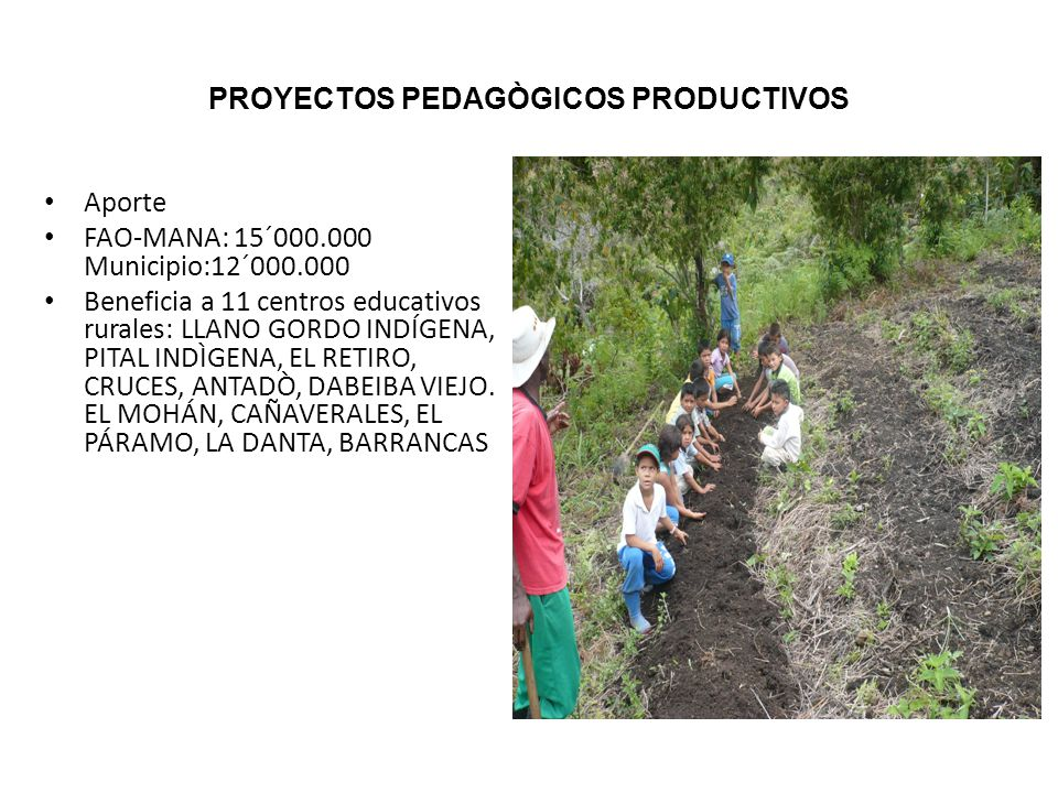 PROYECTOS PEDAGÒGICOS PRODUCTIVOS Aporte FAO-MANA: 15´000.000 Municipio:12´000.000 Beneficia a 11 centros educativos rurales: LLANO GORDO INDÍGENA, PITAL INDÌGENA, EL RETIRO, CRUCES, ANTADÒ, DABEIBA VIEJO.