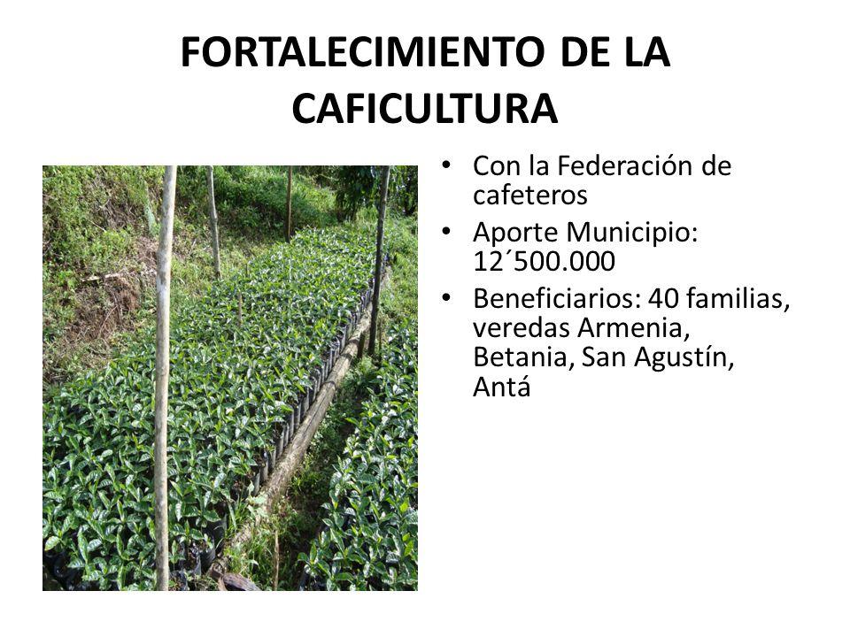 FORTALECIMIENTO DE LA CAFICULTURA Con la Federación de cafeteros Aporte Municipio: 12´500.000 Beneficiarios: 40 familias, veredas Armenia, Betania, San Agustín, Antá