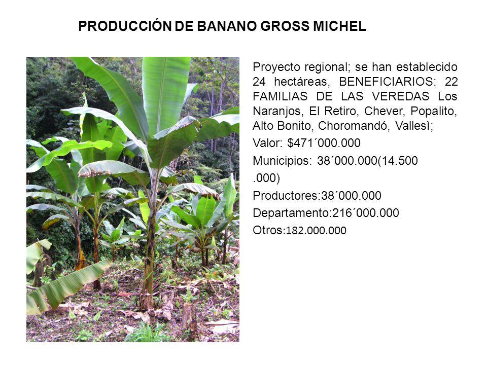 PRODUCCIÓN DE BANANO GROSS MICHEL Proyecto regional; se han establecido 24 hectáreas, BENEFICIARIOS: 22 FAMILIAS DE LAS VEREDAS Los Naranjos, El Retiro, Chever, Popalito, Alto Bonito, Choromandó, Vallesì; Valor: $471´000.000 Municipios: 38´000.000(14.500.000) Productores:38´000.000 Departamento:216´000.000 Otros :182.000.000