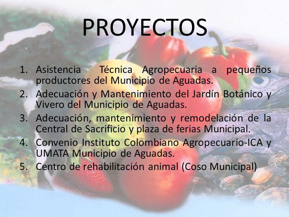 UNIDAD MUNICIPAL DE ASISTENCIA TECNICA AGROPECUARIA UMATA
