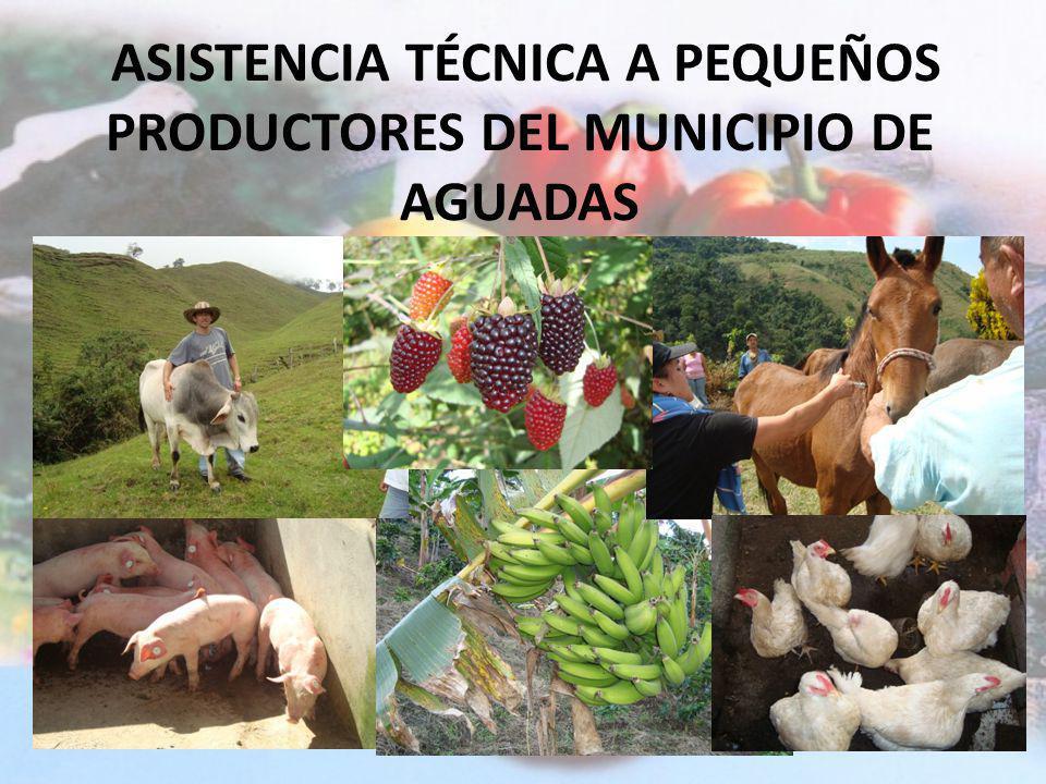 PROYECTOS 1.Asistencia Técnica Agropecuaria a pequeños productores del Municipio de Aguadas. 2.Adecuación y Mantenimiento del Jardín Botánico y Vivero