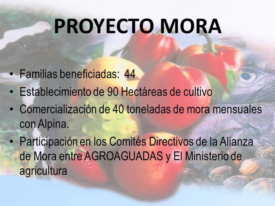PROYECTO MORA