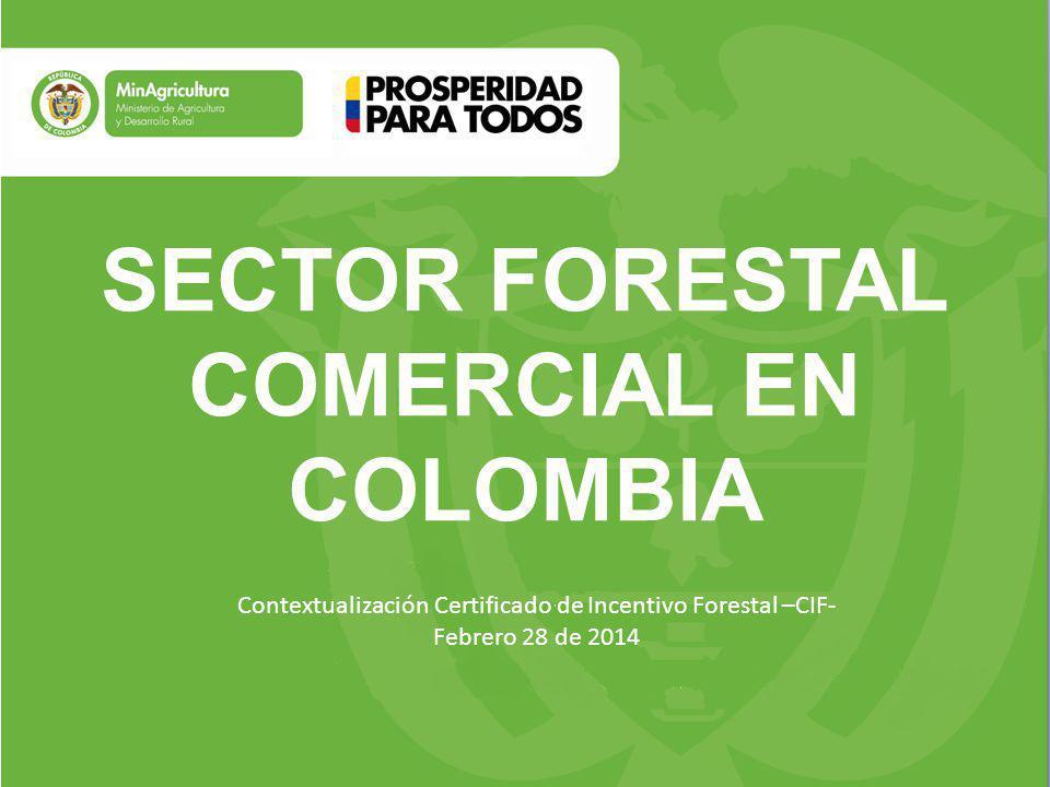 SECTOR FORESTAL COMERCIAL EN COLOMBIA Contextualización Certificado de Incentivo Forestal –CIF- Febrero 28 de 2014