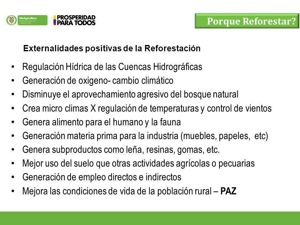 Porque Reforestar? Externalidades positivas de la Reforestación Regulación Hídrica de las Cuencas Hidrográficas Generación de oxigeno- cambio climátic