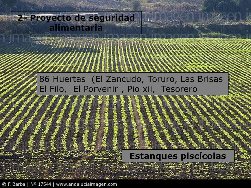 2- Proyecto de seguridad alimentaria 86 Huertas (El Zancudo, Toruro, Las Brisas El Filo, El Porvenir, Pio xii, Tesorero Estanques piscícolas