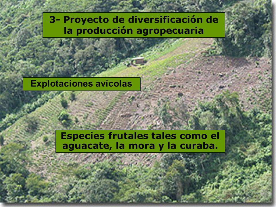 3- Proyecto de diversificación de la producción agropecuaria Explotaciones avícolas Especies frutales tales como el aguacate, la mora y la curaba.