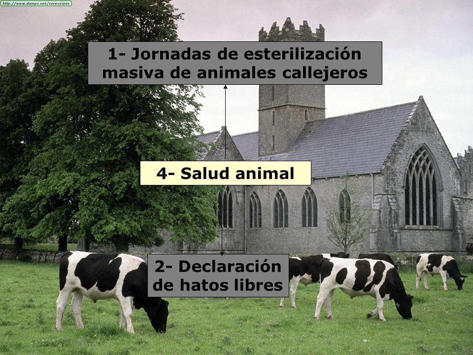 4- Salud animal 1- Jornadas de esterilización masiva de animales callejeros 2- Declaración de hatos libres