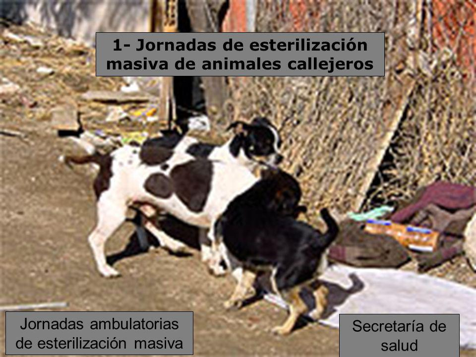 1- Jornadas de esterilización masiva de animales callejeros Jornadas ambulatorias de esterilización masiva Secretaría de salud