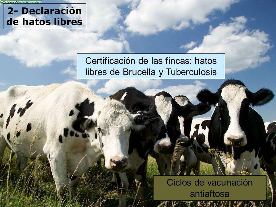 2- Declaración de hatos libres Certificación de las fincas: hatos libres de Brucella y Tuberculosis Ciclos de vacunación antiaftosa