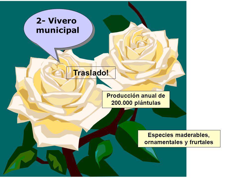 Producción anual de 200.000 plántulas Especies maderables, ornamentales y frurtales 2- Vivero municipal Traslado!
