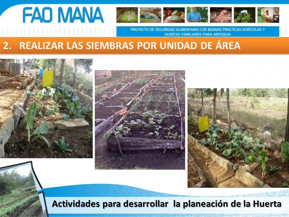 2. REALIZAR LAS SIEMBRAS POR UNIDAD DE ÁREA Actividades para desarrollar la planeación de la Huerta