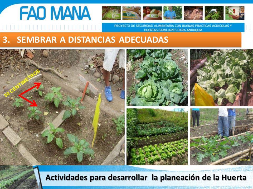 3. SEMBRAR A DISTANCIAS ADECUADAS 50 CENTIMETROS Actividades para desarrollar la planeación de la Huerta