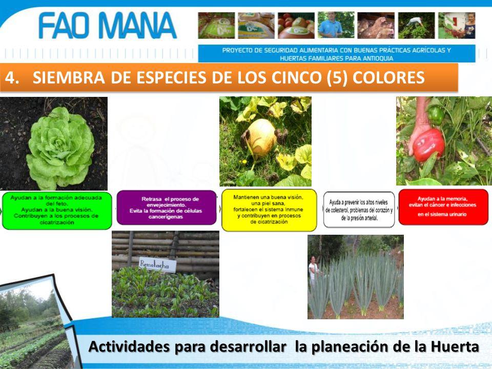 4. SIEMBRA DE ESPECIES DE LOS CINCO (5) COLORES Actividades para desarrollar la planeación de la Huerta