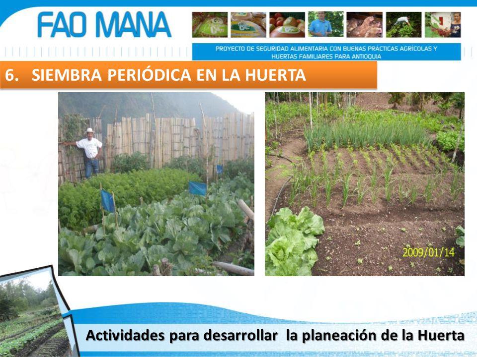 6. SIEMBRA PERIÓDICA EN LA HUERTA Actividades para desarrollar la planeación de la Huerta