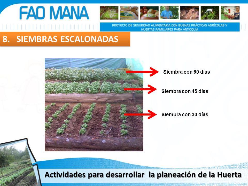 8. SIEMBRAS ESCALONADAS Siembra con 30 días Siembra con 45 días Siembra con 60 días Actividades para desarrollar la planeación de la Huerta